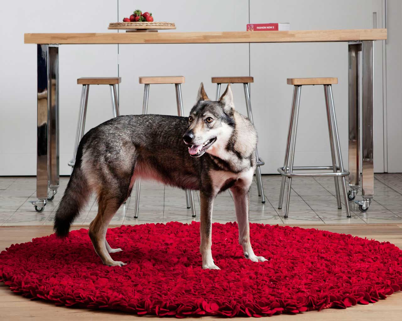 red wool carpets online dog kitchen ideal