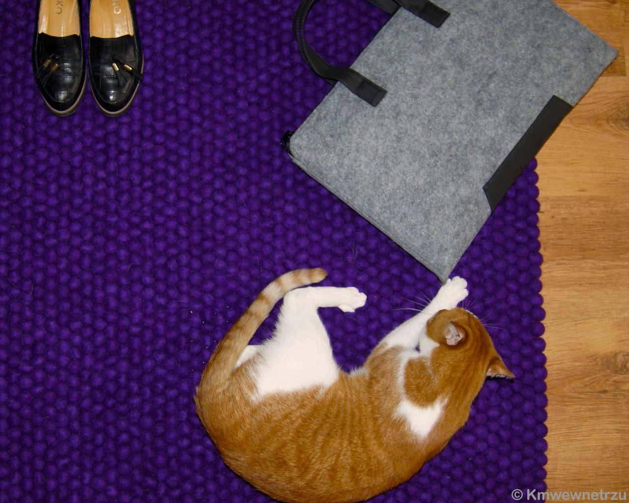 purple woollen carpet red cat sleeping